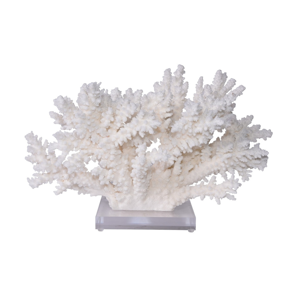 Branch Coral On Acrylic Base Extra Large - 2 Sizes