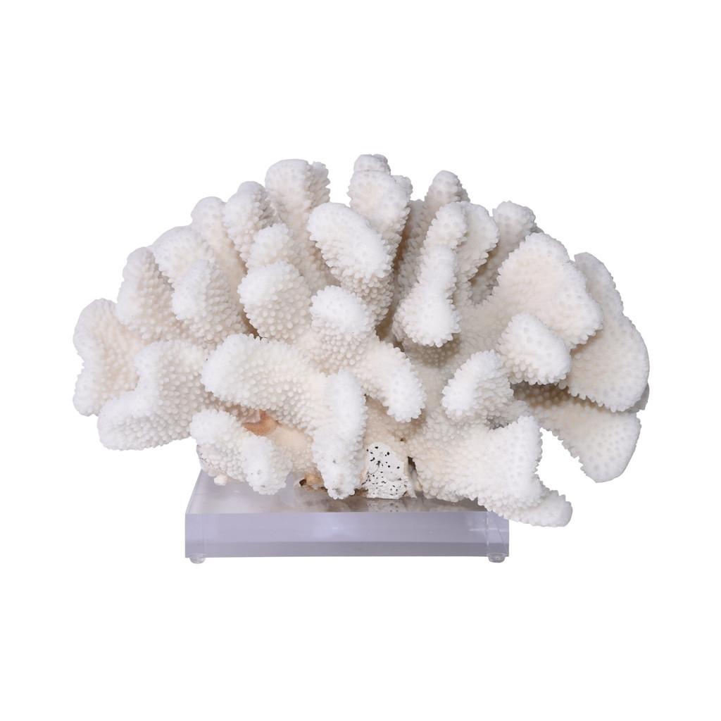 Cauliflower Coral On Acrylic Base - 3 Sizes