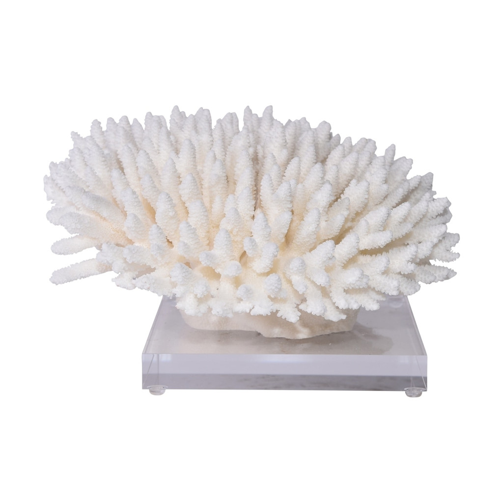 Finger Coral On Acrylic Base - 3 Sizes