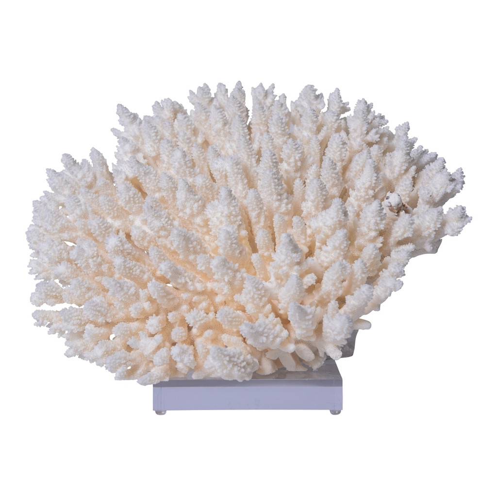 Table Coral On Acrylic Base - 3 Sizes
