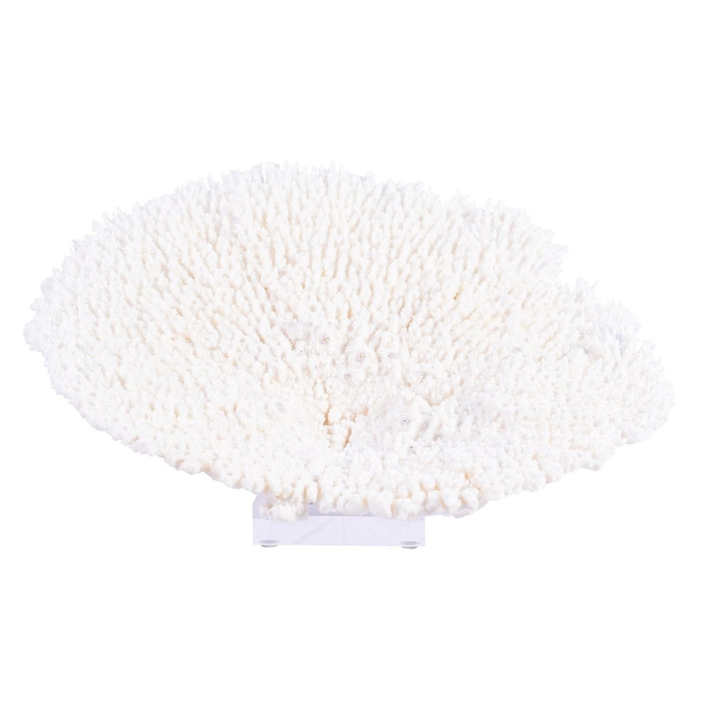 Table Coral Special On Acrylic Base - 3 Sizes