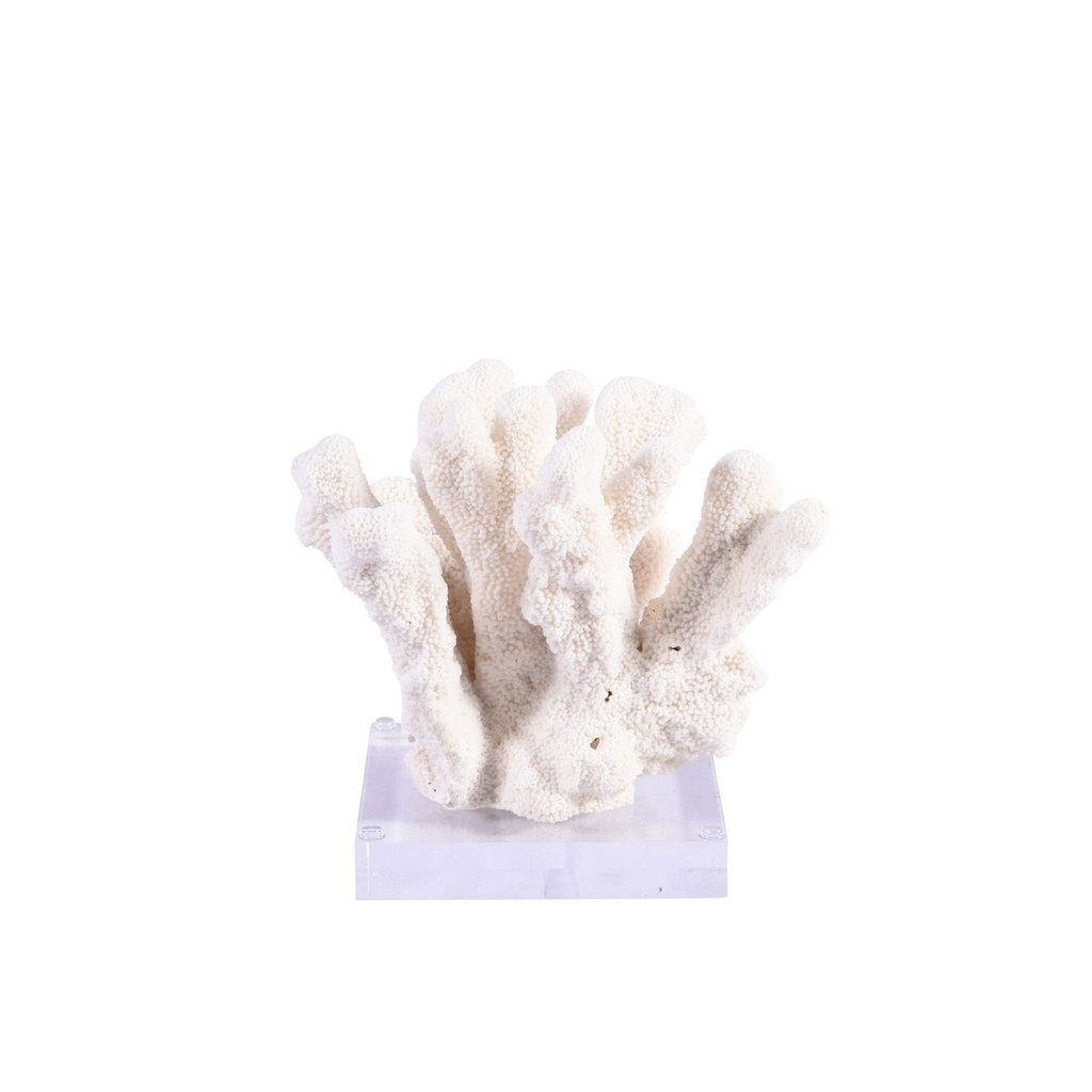 Cats Paw Coral On Acrylic Base - 3 Sizes