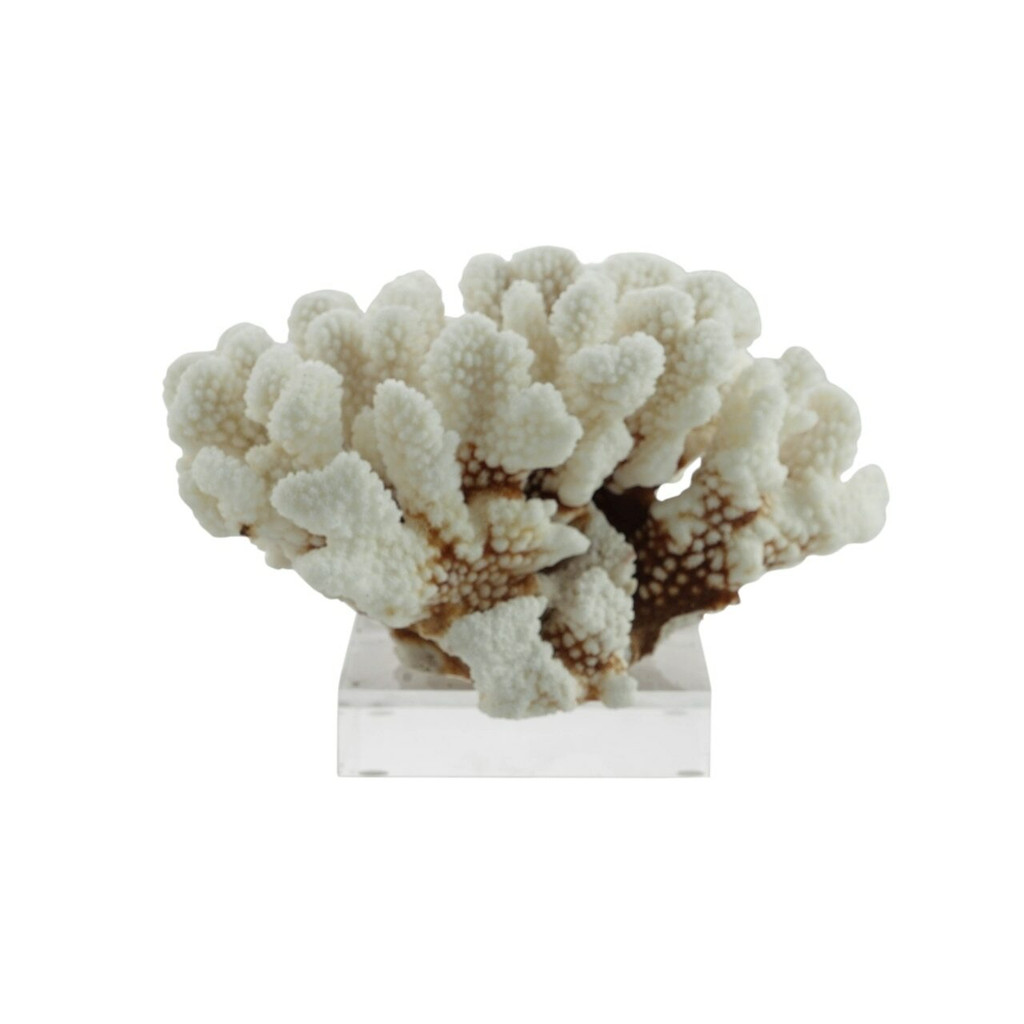 Brownstem Coral On Acrylic Base - 3 Sizes