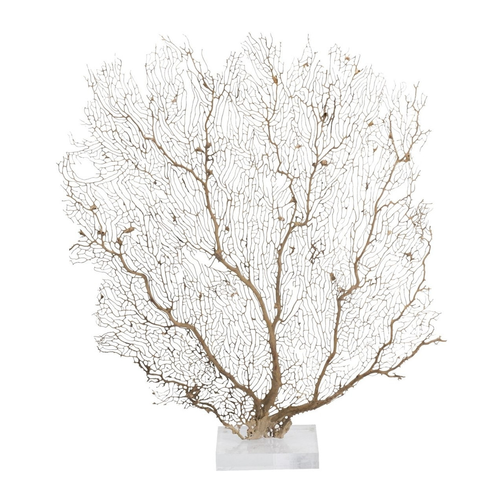 Cream Sea Fan On Acrylic Base - 3 Sizes