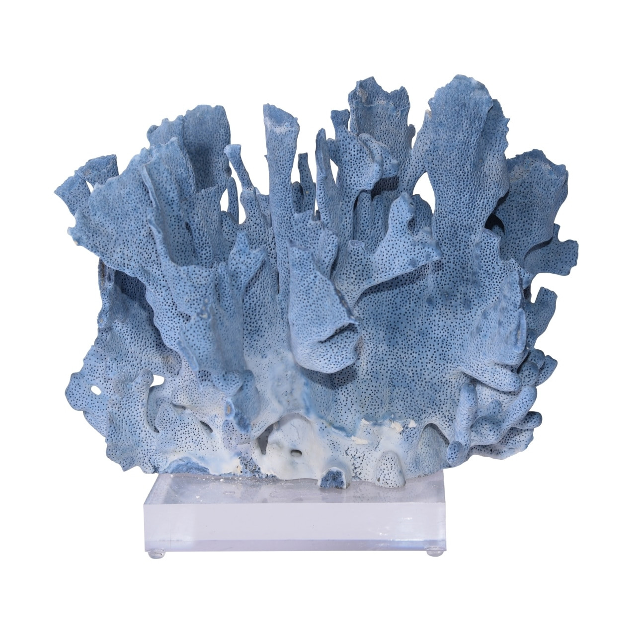 Blue Coral On Acrylic Base - 3 Sizes