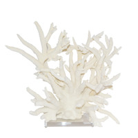 "Staghorn Coral 18"" Full On Acrylic Base"