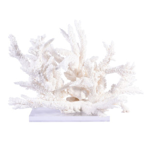 Branch Coral Creation