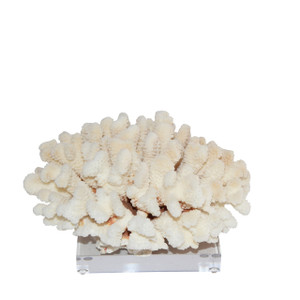 Cluster Coral On Acrylic Base - 3 Sizes
