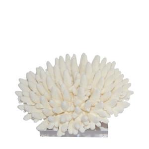 Finger Coral On Acrylic Base - 3 Sizes