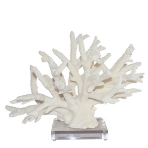 Staghorn Coral Creation 15 Inch + On Acrylic Base