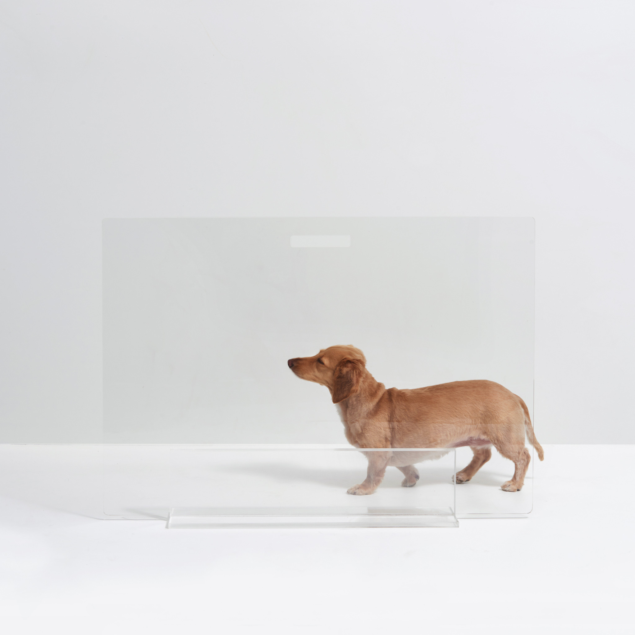 clear view acrylic pet gate with lucite base invisible see through modern dog barrier