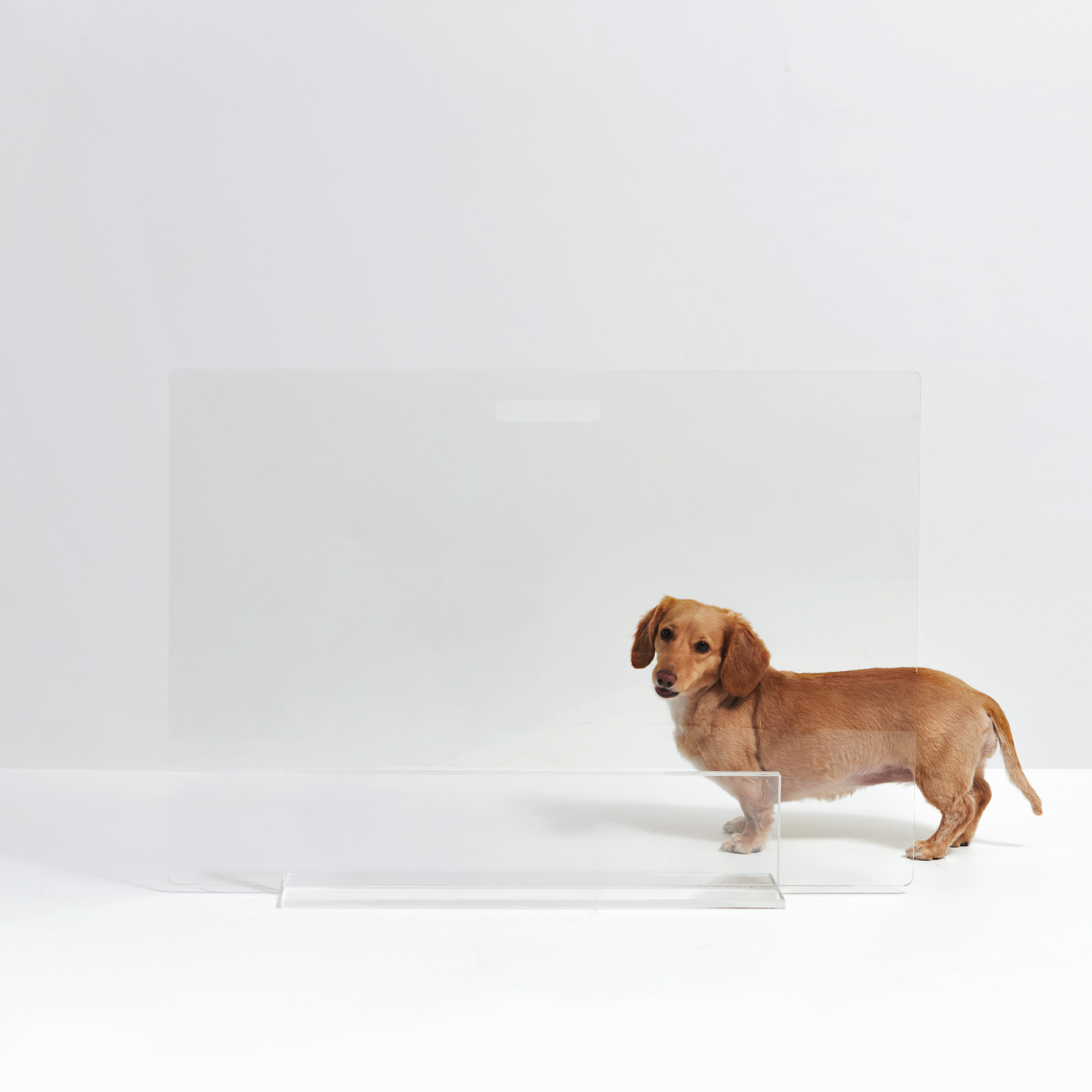 clear view acrylic pet gate with lucite base dog invisible barrier pen