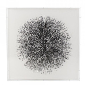 zentique  Abstract Black Branches Framed Wall Art in Clear Shadowbox
