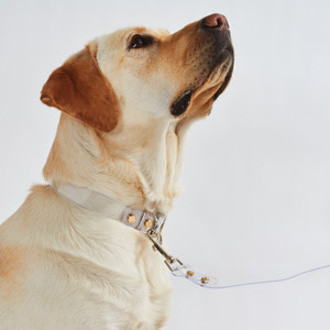 Clear Acrylic Pet Leash and Collar Set