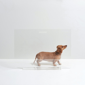 clear acrylic pet gate with acrylic base lucite dog barrier modern