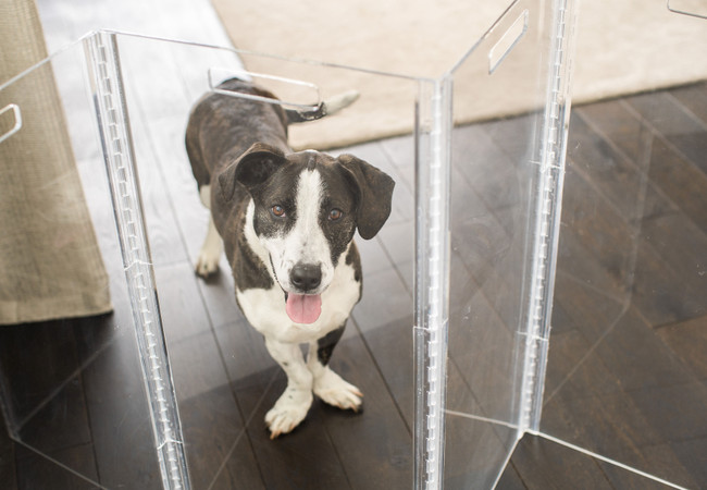 Clear Dog Products: Out With the Old, In With the New, Clear, & Modern
