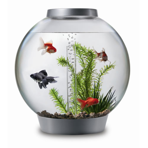 acrylic-modern-biorb-8-gallon-aquarium-kids-fish-tank.jpg