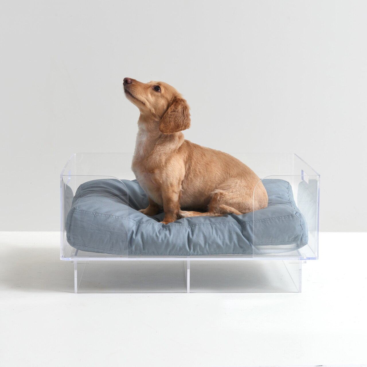 clear-acrylic-lucite-modern-pet-dog-raised-bed-luxury-designer.jpg