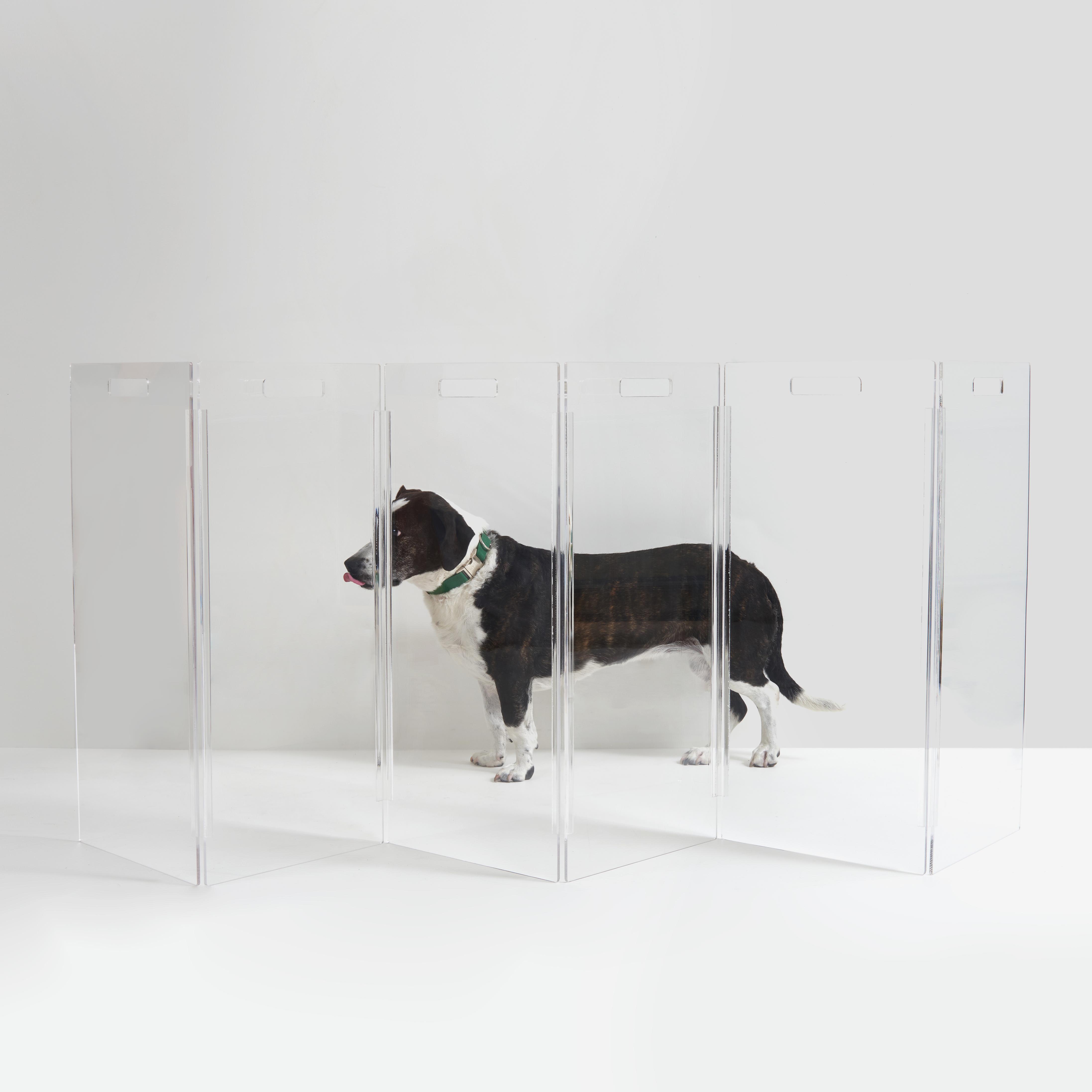dog behind zig zag panel