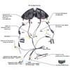 Honda CBR1000RR  headlight