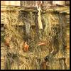 Red Rock Outdoors Desert / Grassland Camouflage Ghillie Blanket 5 x 12