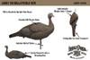 Lucky Duck HD Collapsible Hen Turkey Decoy 21-50117-7