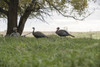 Lucky Duck HD Collapsible Jake Turkey Decoy 21-50217-4
