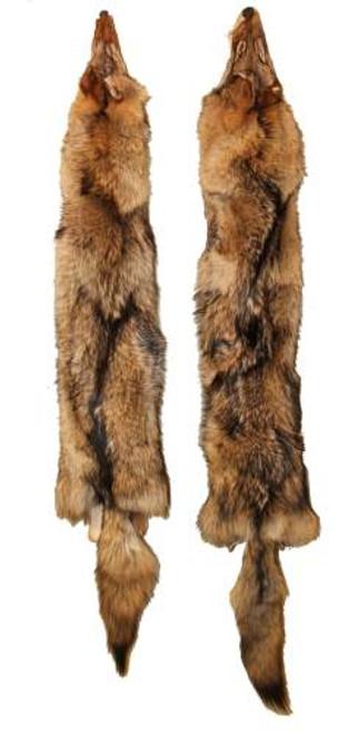 Tanned Coyote Pelt / Fur TFcoy