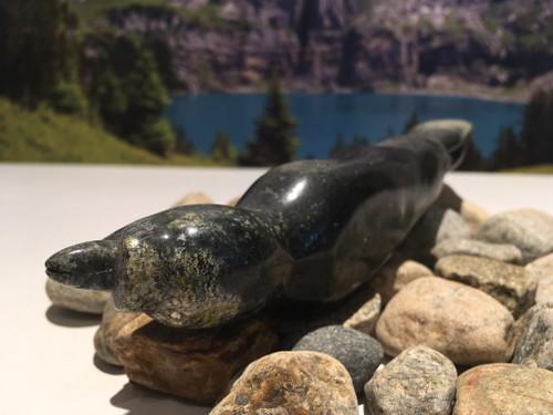 nunavik seal with tongue out 41034 c