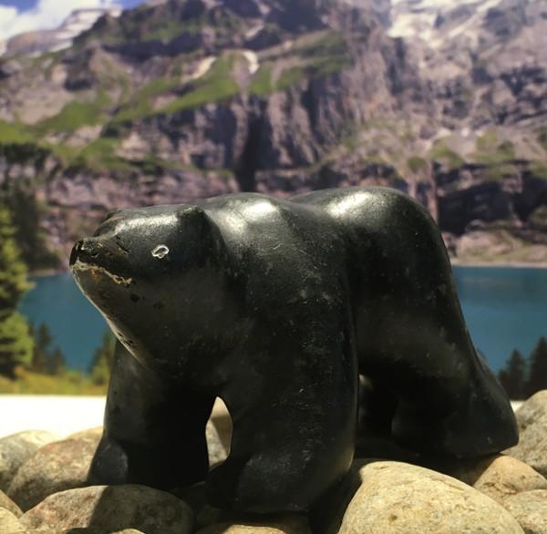 nunavik bear 07955