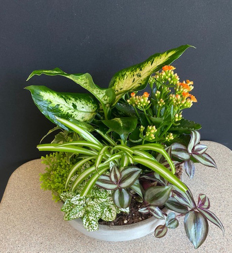 Dish garden, a  mix of 7 beautiful plants done in a slate gray ceramic container
