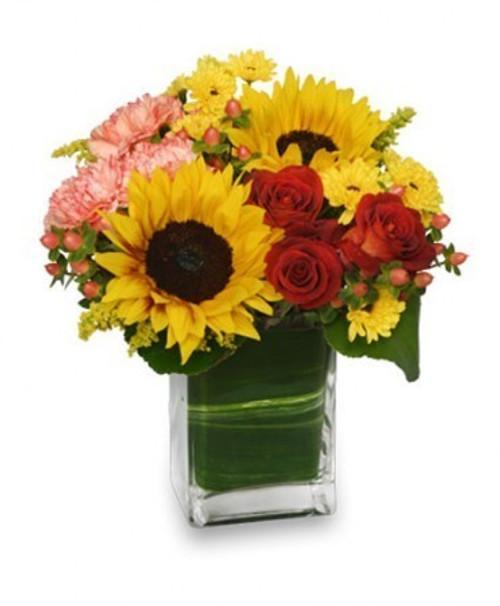 Season for sunflowers