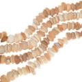 Graduated Natural Shell Beads 35009