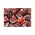 Natural Spiny Oyster Shells 34780