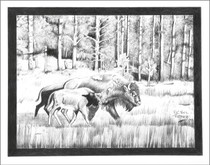 Native American Buffalo Art Print 17221
