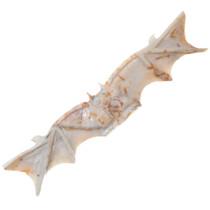 Zuni Bat Fetish Carving 35689