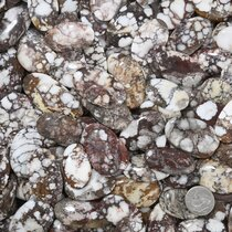 Large White Buffalo Gemstones Oval Cabochons 37268