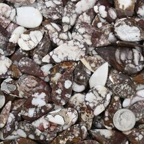 White Buffalo Cabochons Large Hand Cut Teardrop 37270