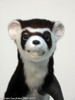 Animated weasel or ferret puppet being made for movie and film shots