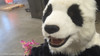 Panda costume face with mouth, lip, and eye blink animation