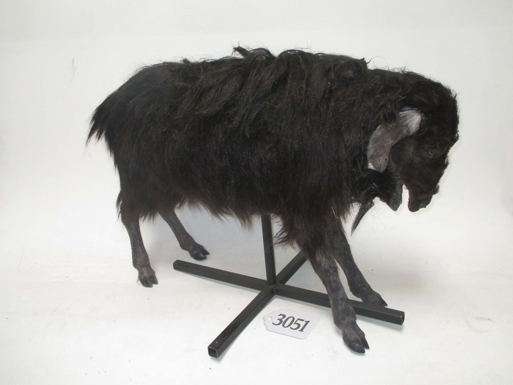 realistic goat replica on a stand