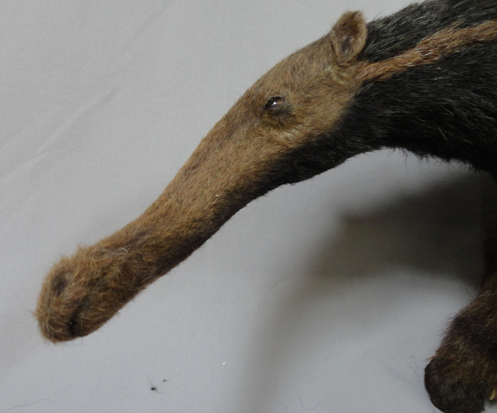 Anteater Replica Movie Prop