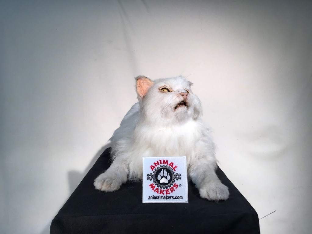 Realistic Domestic Cat Replica Puppet in Laying Position