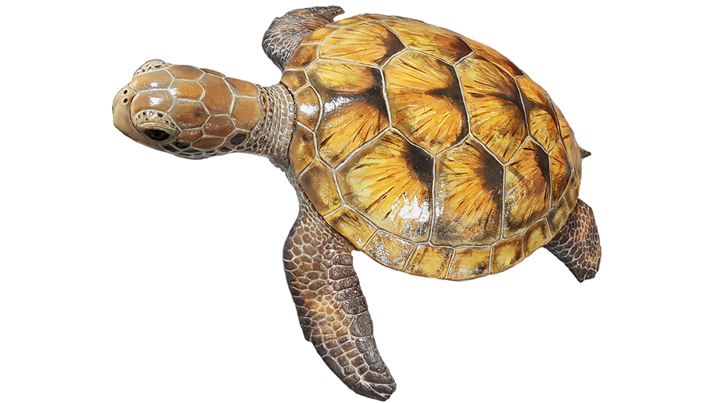 Adult Green Sea Turtle Replica (various color schemes can be requested)