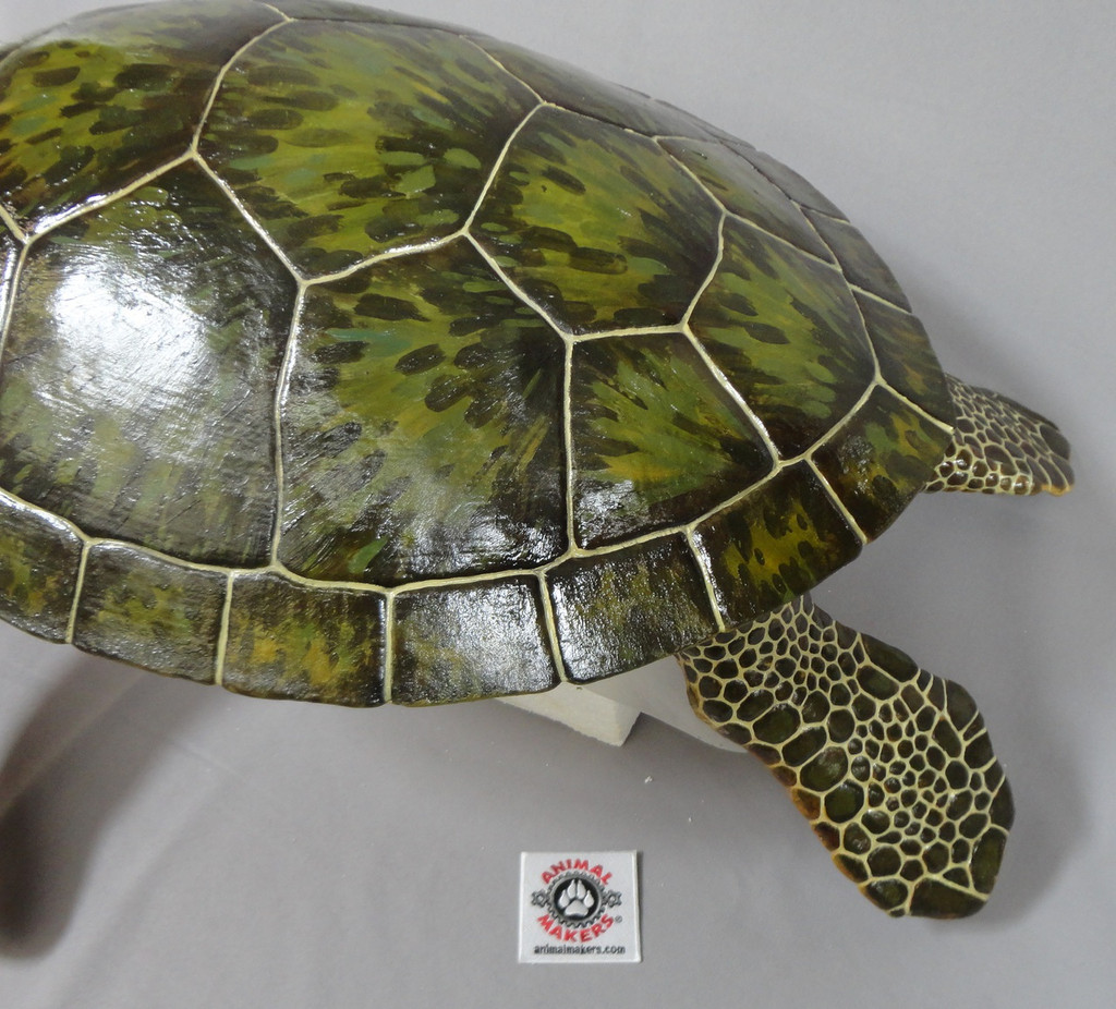 Adult Green Sea Turtle Replica