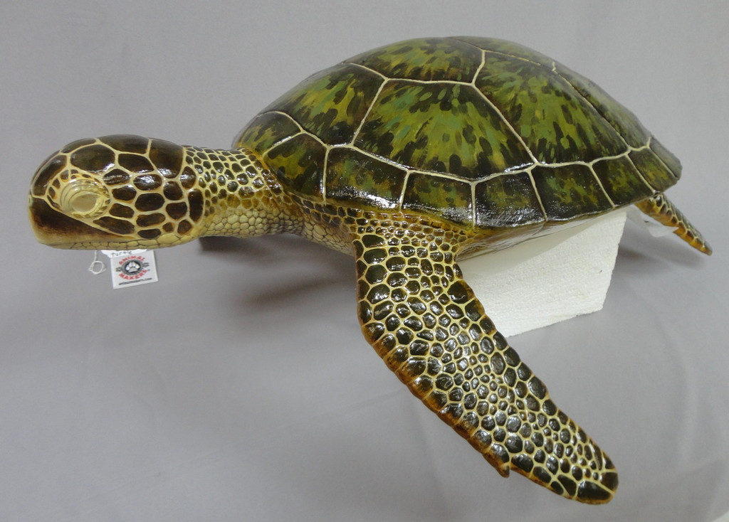 Adult Loggerhead Sea Turtle Replica