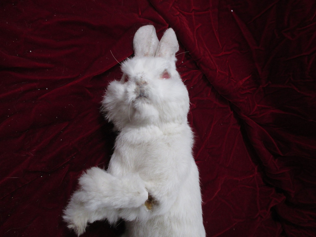 Realistic Rabbit Hare Replica