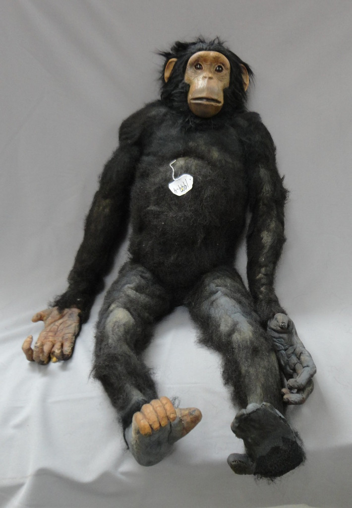 Chimp Prop 4