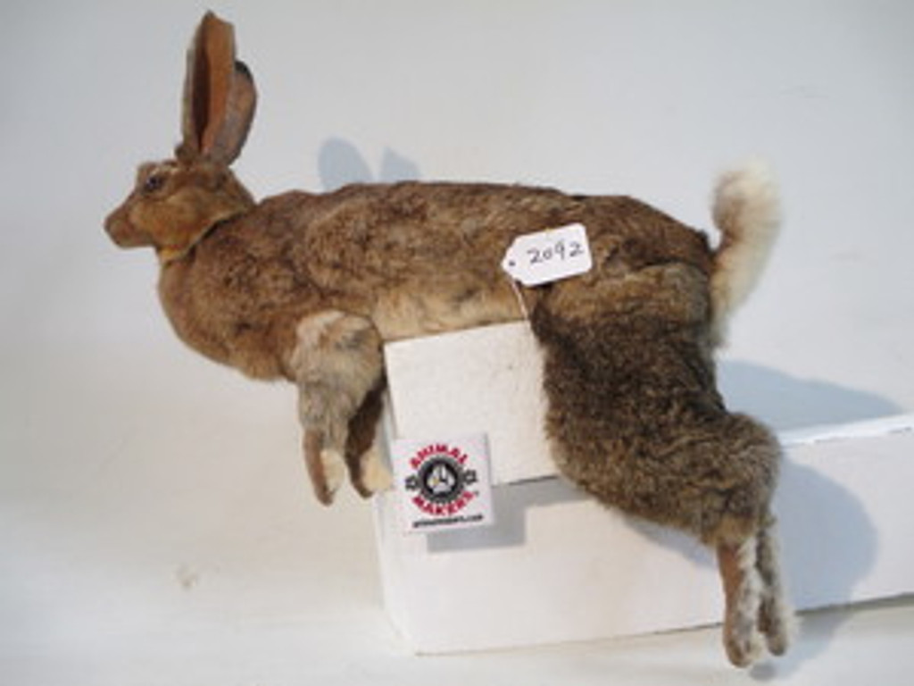 Realistic Animated Rabbit Hare Prop
