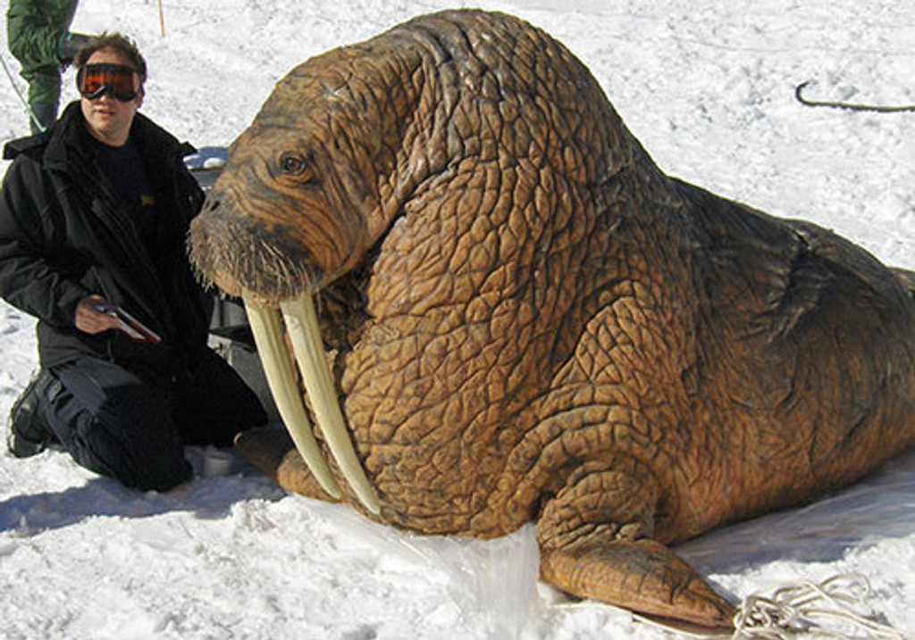 This walrus costume is made from the art production and mold set offered online here.